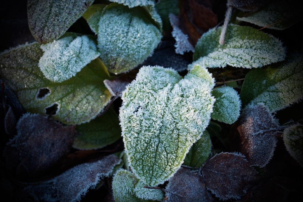 robert-van-bolderick-2015-frozen-4