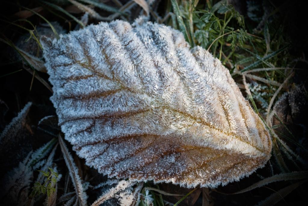 robert-van-bolderick-2015-frozen